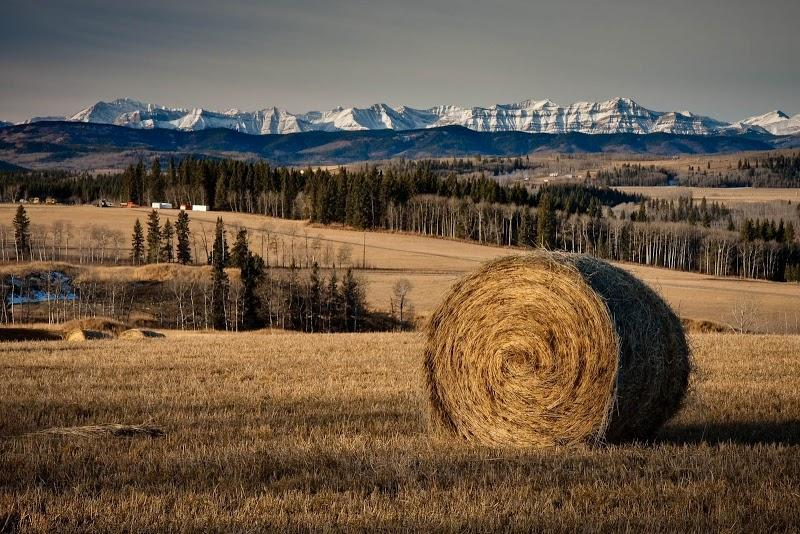 Photographer Riverwood Photography in Calgary (AB) | WebMetric